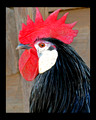 Historic Brattonsville Rooster